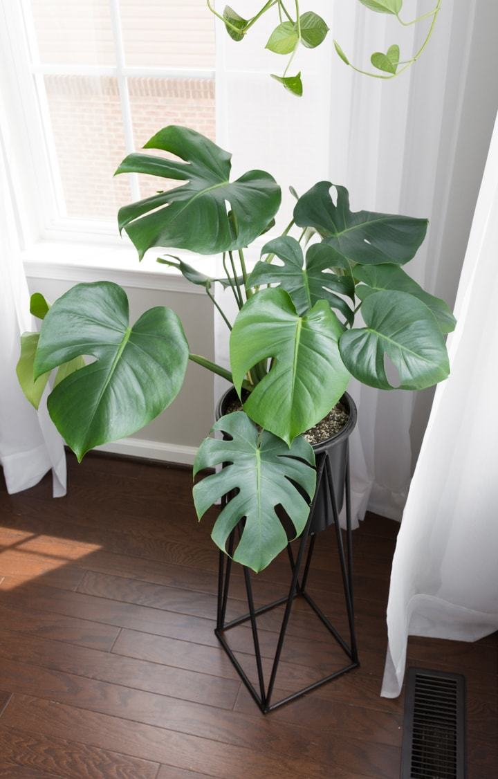 12 Of The Best Mid Century Modern Indoor Plants For Your Living Space Nook Find