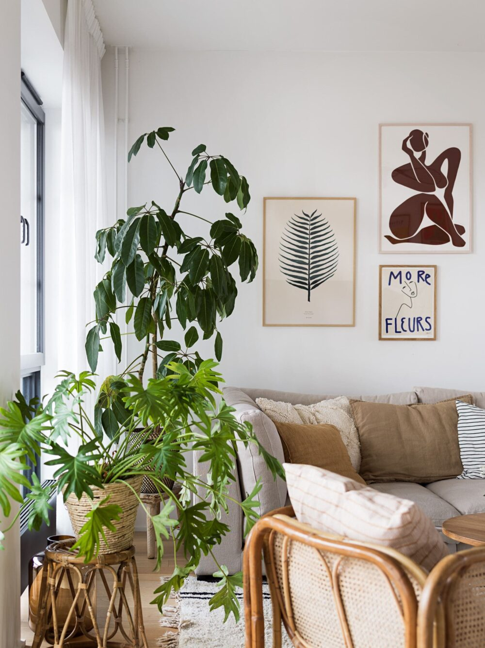 12 Stunning Mid Century Modern Indoor Plants For Your Living Space